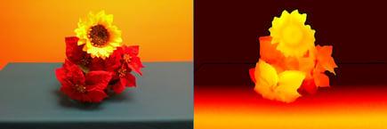 flowers_side_by_side